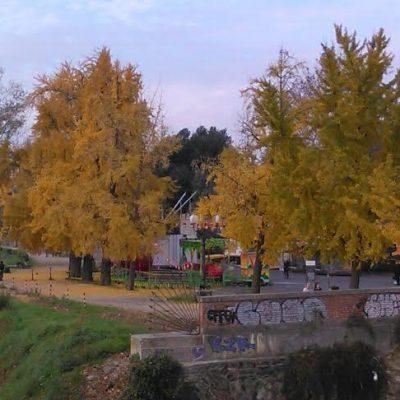 Gli alberi oltre la coda