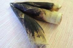 Bambù01