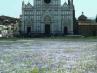 Santa Croce fiorita - Marcello Scalzo