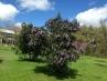 Il mio giardino in fiore