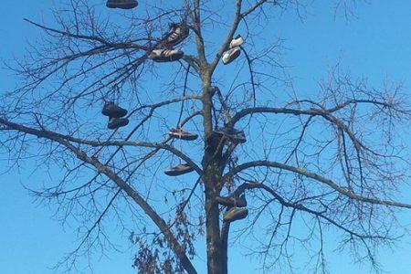 L'albero delle scarpe