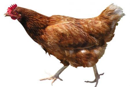 Ma quanto saremo polli…