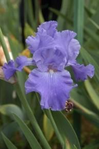Apertura straordinaria per il Giardino dell'Iris