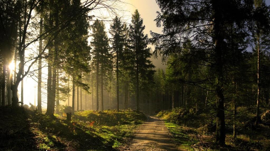 Foto di http://allwallpapersfree.blogspot.com