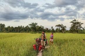 risaie Cambogia